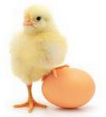 Свойства куриных яиц